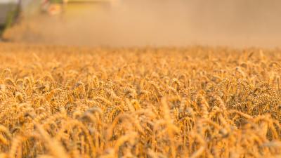 Lantbruk och odling